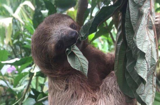 Sloths, Monkeys and Waterfall...