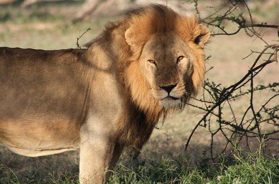 5 jours meilleur circuit de safari...