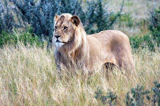 Tour Safari di 3 giorni nel Central