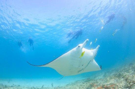 Marine Eco Safari - Nager avec les...