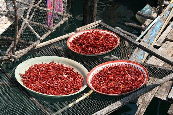 Provinz Trat, Thailand: hot spices - vor einer Garküche in Kho Kut zum Trocknen ausgebreitet