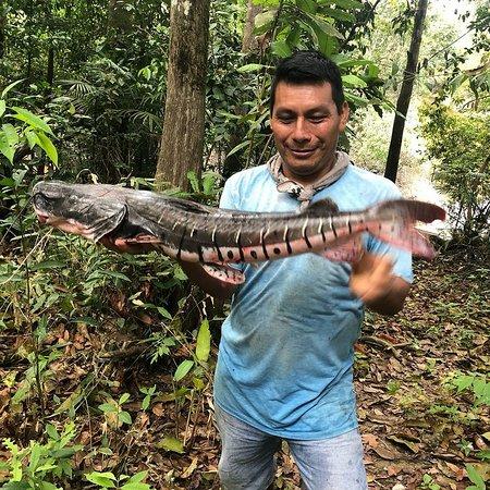 Iquitos Amazon Region, Peru: VISIT  THE JUNGLEOFIQUITOS PERÚ
