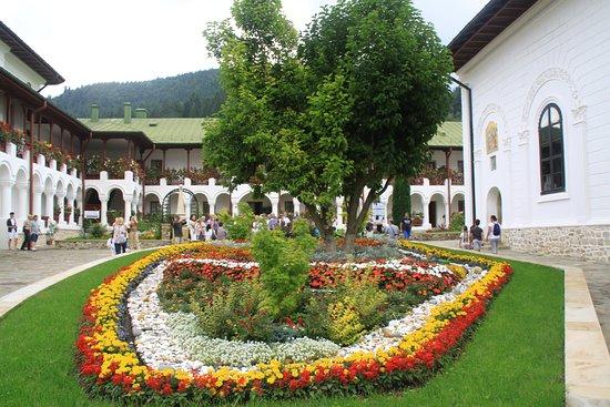 Neamt County, Rumania: flor