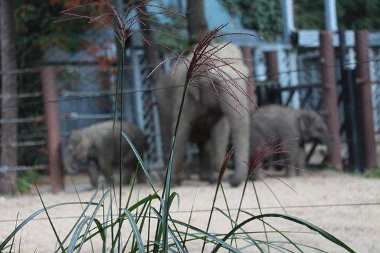 DierenPark Amersfoort afbeelding