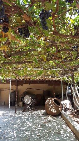 Erimi, Chipre: Cyprus Wine Museum