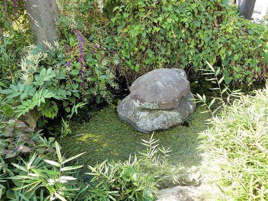 Kamei's Water