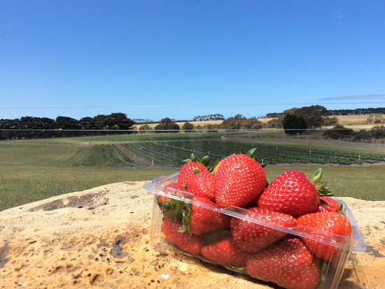 Surf Coast Strawberry Fields