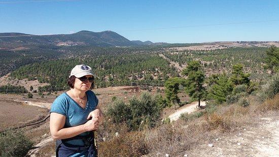 Biriya Forest Photo