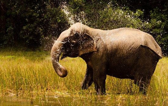Bilde fra Wilpattu National Park