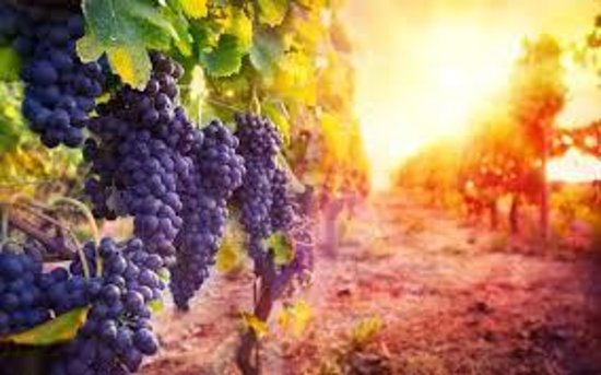 Nashik Wine Holidays