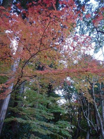 Choju-ji Temple: 境内の紅葉