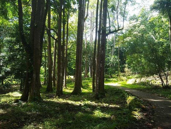 Ke'anae Arboretum