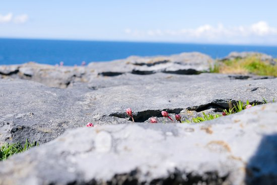 The Burren is like being on another planet. It has so many exotic looking flowers that appear to spring up from rocks.