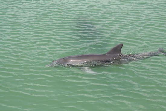 Southwest Florida Dolphin & Eco Tours