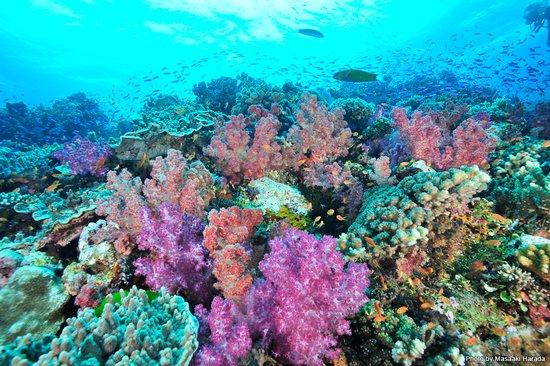 Rakiraki, Fiji: 海の中は青だけじゃない。女の子が大好きなピンクだってある💙  #マリンダイビング #marinediving #lascuba #ラスクーバ #diving #scubadiving #underwaterphoto #ダイビング #スクーバダイビング #水中写真