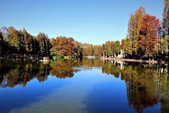 Saitama, Japan: 池の奥には噴水があります