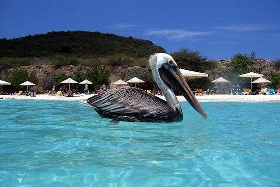私人库拉索岛海滩之旅包括Kenepa海滩,包括接送服务