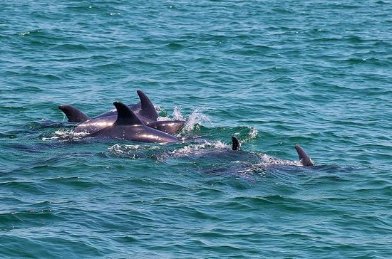 Dolphin Watching Tour by Catamaran...