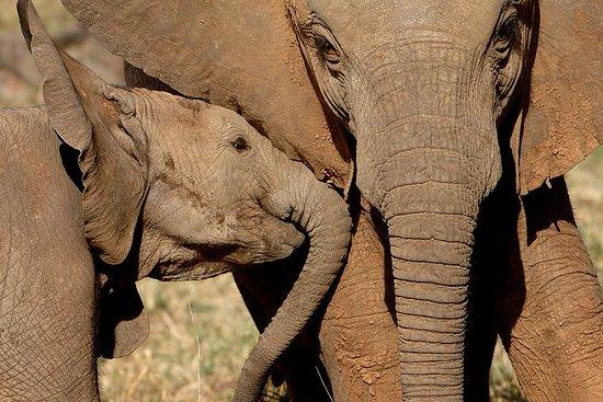 Addo Elephant National Park - Private...