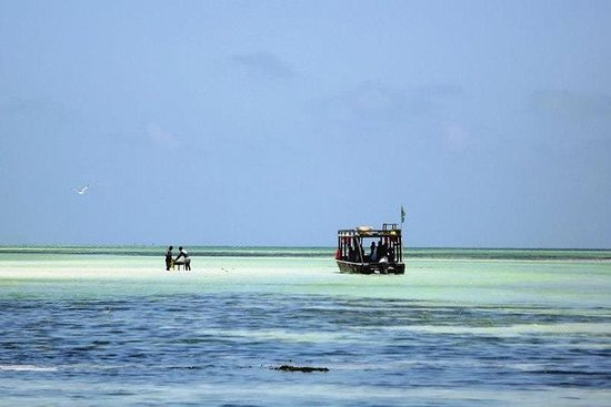 Safari marino dalla spiaggia del