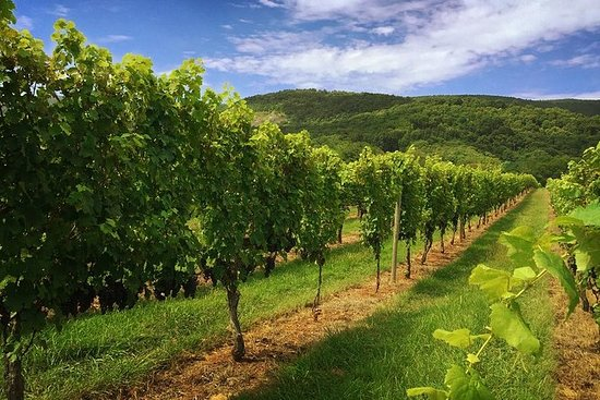 Ugedag Virginia Private Custom Wine...