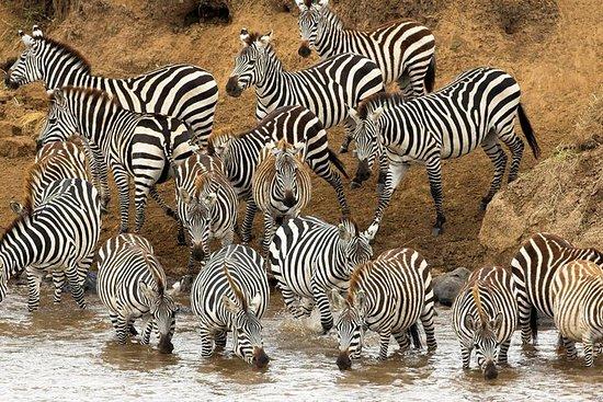 タンザニアのタランギー国立公園での終日サファリ