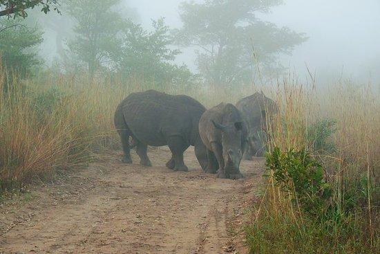 Kruger National Park Morning Game...