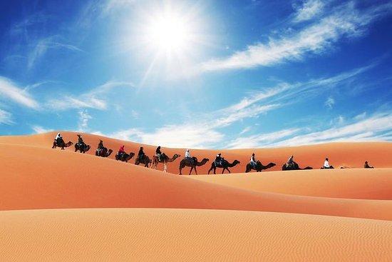 Kamelentocht in Merzouga met ...