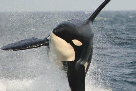 Vancouver naar Victoria - walvissen ...