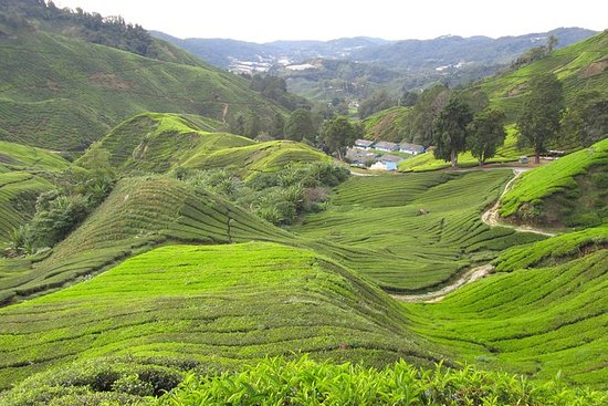 Full Day Cameron Highlands Tour