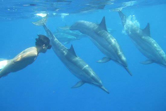 Wild Dolphins and Reef Snorkel...