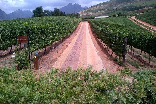 Safari de vino basado en Ciudad del...
