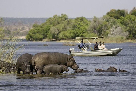 Chobe Extended Day Trip from Victoria...