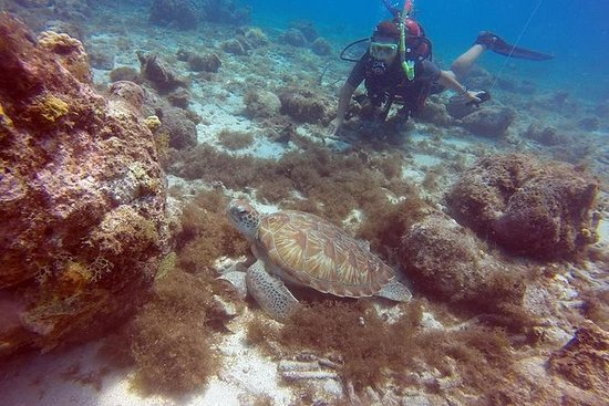 3-Day SSI Open Water Scuba Diving...