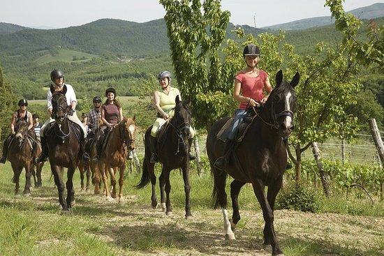 Reiten in der Toskana für erfahrene...
