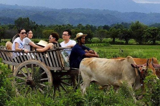 Dagelijkse lokale plattelandservaring ...
