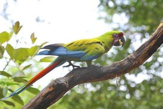 Observación de aves en Cerro Blanco...