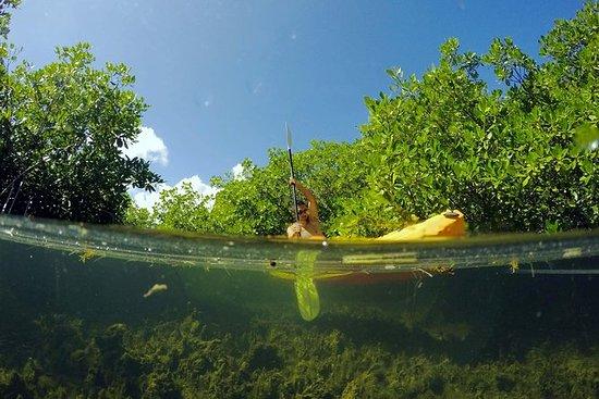 Magic Mangrove Paddle in Beef Island...