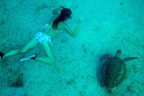 Turtle Swim e Catamaran Tour para a...