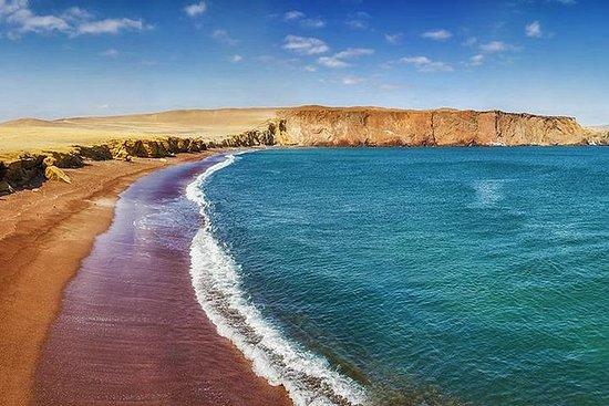 Paracas National Reserve Private Tour