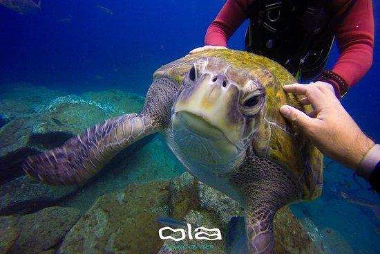 Primera experiencia de buceo en Costa...