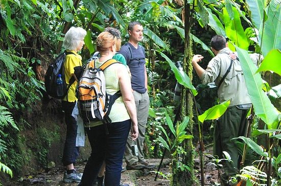Dagtrip naar Monteverde Cloud Forest