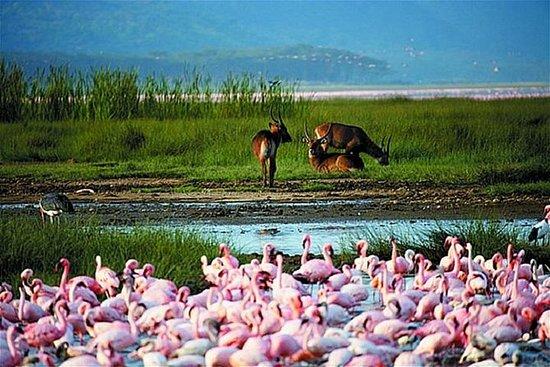 Lake Nakuru National Park Day Tour from...