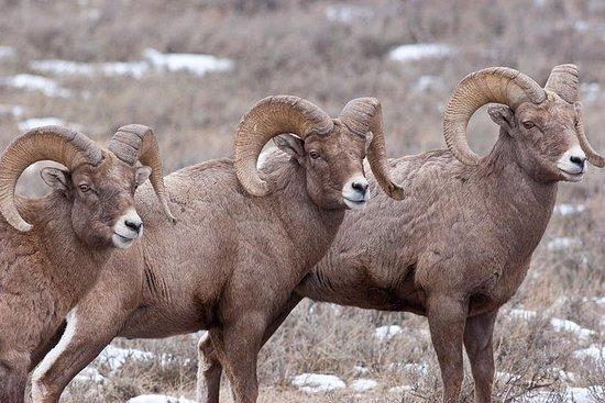 Winter Best of Jackson Hole Wildlife ...
