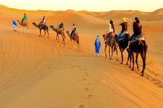 Trek magique de chameau