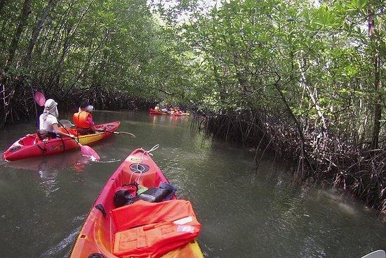 ランカウイ島のマングローブカヤック体験