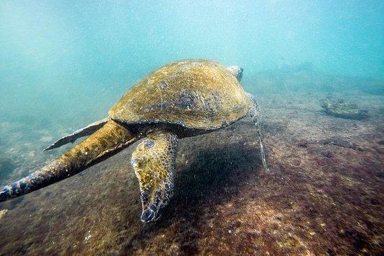 Esnórquel en las Islas Galápagos...