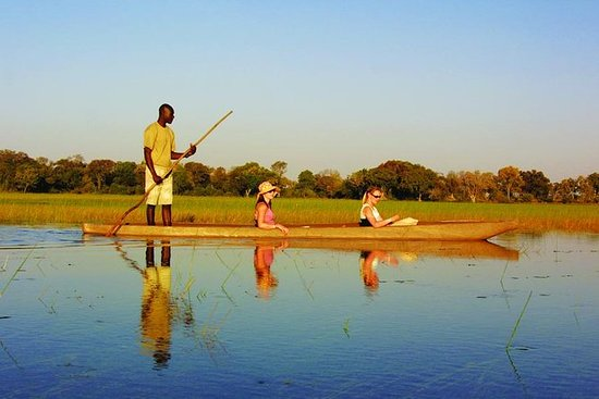 Faits saillants du safari au Botswana