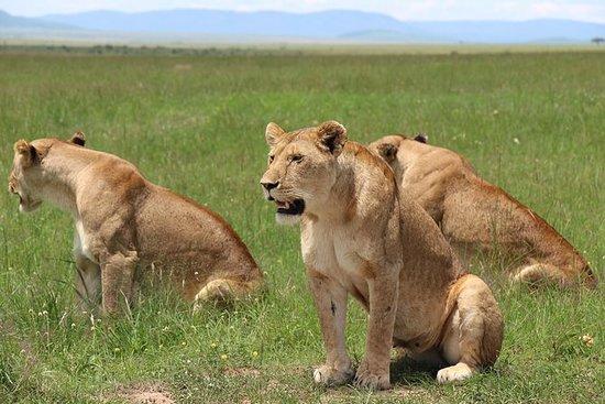 3 jours de safari privé Masai Mara...