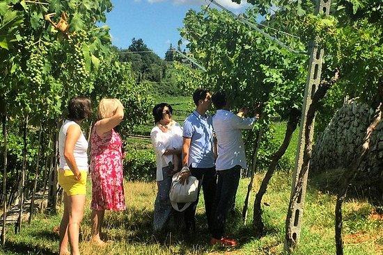 通过3个选定的葡萄酒厂体验Valpolicella